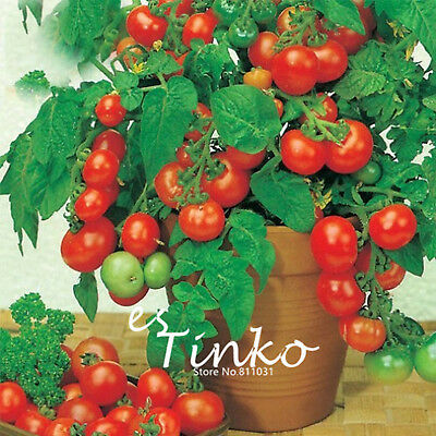 100pcs Bonsai Tomato Seeds Mini Cherry Sweet Fruit Vegetable Organic Tomato Seed