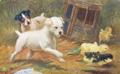 Old Postcard 2 Fox Jack Russell Terriers & 3 Chicks England 1921 Dogs