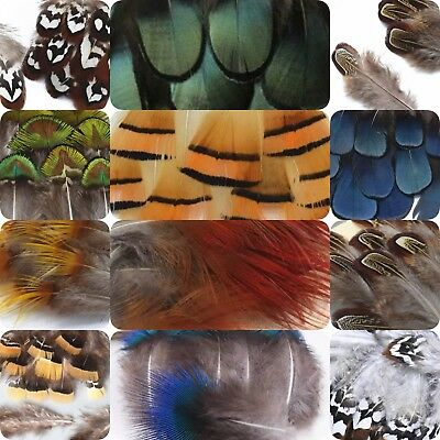 20pcs Pheasant Peacock Plumage Feathers 18 Types DIY Craft Millinery Fly tying