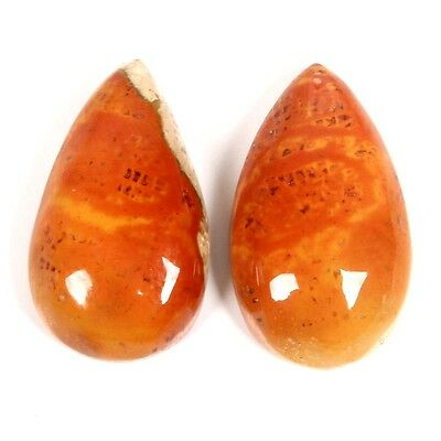 Wonderful 12.5 Cts Natural FOSSIL CORAL Pear Gemstone Cabochon 17x10 mm s-29054