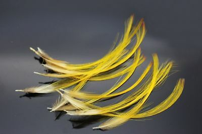 Pack Of 15 X Golden Pheasant Topping Crest Feathers For Fly Tying, Brooch Making