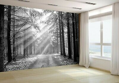 Coniferous forest in the morning Wallpaper Mural Photo 7199901 premium paper