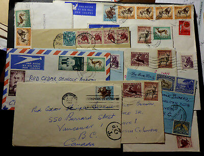 S South African 1950-60's Covers (12) To  Vancouver B.c. Canada (R6) P.due Lion