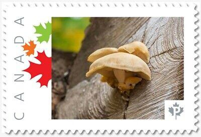 MUSHROOM on LUMBER LOG = Picture Postage stamp MNH-VF Canada 2019 [p19-02sn17]