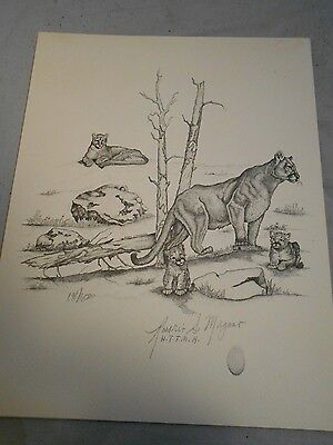 Mountain Lion  Print Rosario S. Morgano Numbered and Signed  8 X !0
