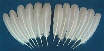 12 White Holland Turkey Secondary Wing Feathers