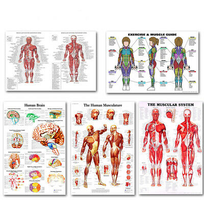 Human Body Anatomy System Silk Poster Anatomical Chart Doctor Educational Poster