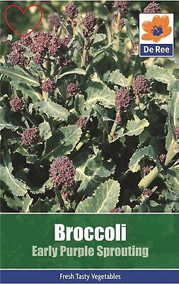 Vegetable Broccoli Early Purple Sprouting Seeds