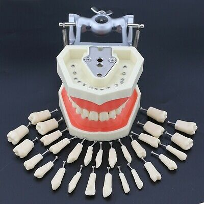Kilgore Nissin 200 Compatible Dental Practice Typodont Teeth Model 28pcs Tooth