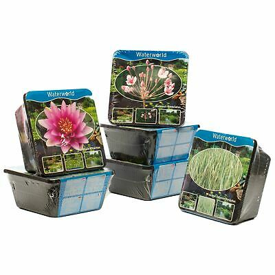 Pond Plants Prepacked Water Planting Kit Basket Live Real Marsh Bog Aquatic