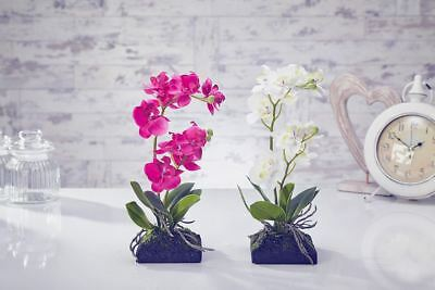 Artificial, Topiary Flowers Orchid Moss & Root in White