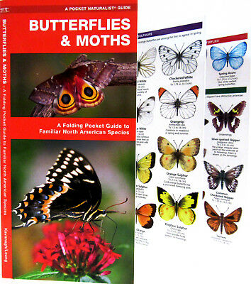 Butterflies and Moths A Folding Pocket Guide North America - Waterproofed NEW