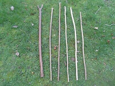 6 x Hazel Wood Shanks For Stick Making - Different Lengths - Craft - Hobby  §4