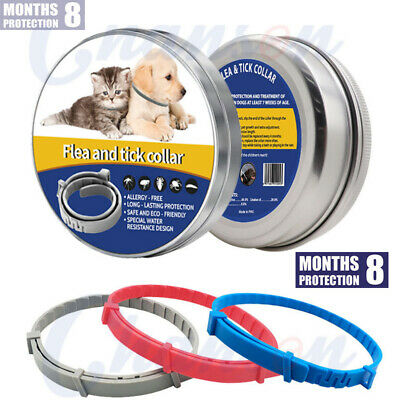 38cm Flea and Tick Collar Anti Insect for Small Pet Dog Cat 8 Month Protection