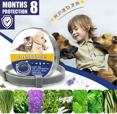 Flea&Tick Collar for Small Dogs under 8kg (18 lbs) and Cats 38cm 8 Month protect
