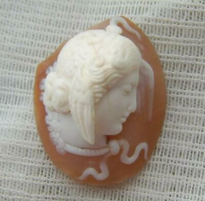 Victorian Young Medusa Hand Carved Shell Cameo Unmounted and Sold As Found
