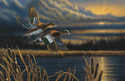 Richard Clifton WIDGEON-OUT FRONT art print Ducks NICE