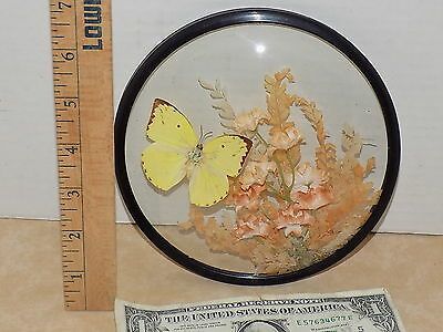 Convex Bubble Curved Glass Picture Butterfly Dried Flowers Vintage Round