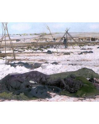 Battle Of Wounded Knee 1890 Lakota Sioux Native American Photograph