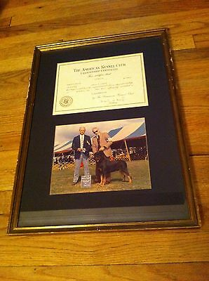 Best Show 1980 framed photo champion certificate American Kennel Club Rottweiler