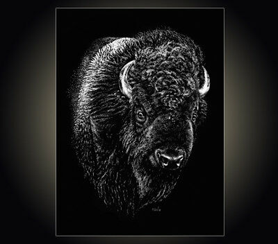 """Lithograph print """"Rufus"""" A pen & ink on scratchboard drawing of a buffalo Bison"""