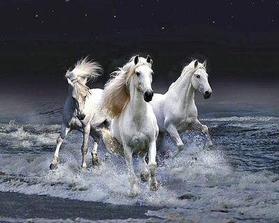 Modern Home Decor HD Prints oil painting on canvas Animals Horses wall art dw08