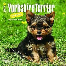 Yorkshire Terrier Puppies 2017 Calendar by Brown... | Book | condition very good