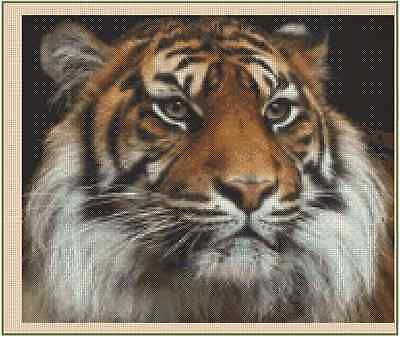 Bengal Tiger Cub Space Counted Cross Stitch Kit Design Works