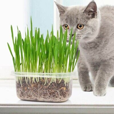 Cat Grass Growing Kit- Seeds, Plastic Box, Vermiculite Culture Soil For Pet Cats