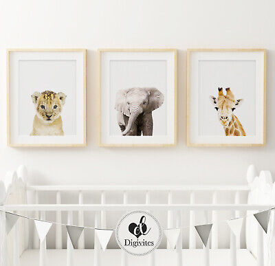 Baby Animal Nursery Prints, Animal photograph decor, Children's decor. Wall Art