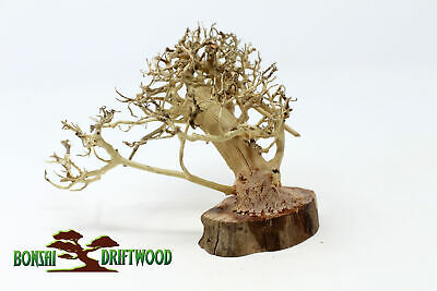 Pet Supplies Shop For Cheap Aquarium Driftwood Bonsai Tree Quince Aquascape Fish Planted Freshwater Bs-308 Fish & Aquariums