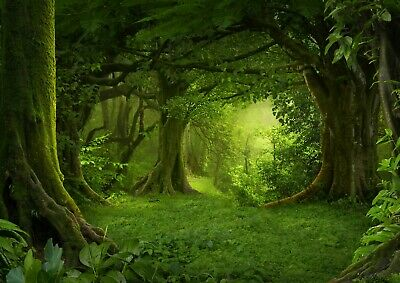 Beautiful Magical Green Forest Poster Size A4 / A3 Nature Poster Gift #8294