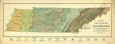 Agricultural map of Tennessee c1896 repro 32x13