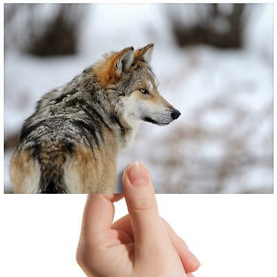 """Wildlife Wolf Snow Wolves - Small Photograph 6"""" x 4"""" Art Print Photo Gift #8104"""