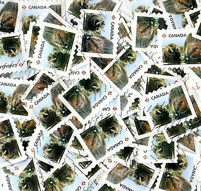 75 USED CANADA 2014 ANIMAL BABIES / BEAVER PERMANENT POSTAGE STAMPS, Scott #2711