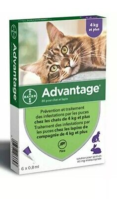 Anti-Puces Prevention Et Traitement Infestations Par Les Puces Chats Et Lapins