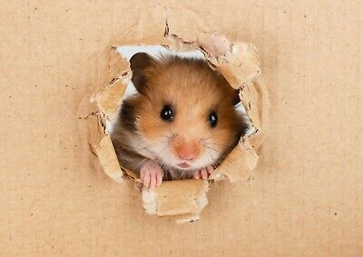 Funny Cute Hamster Poster Print Size A4 A3 Cute Animals Poster Gift #8521
