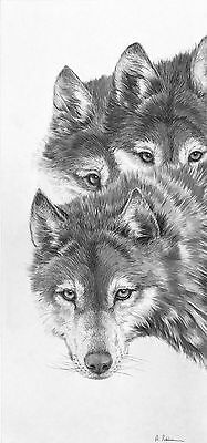 Watchful by Andrew Robinson Limited Edition Print Wolves Wolf, B&W print