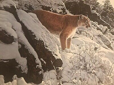 """Ron Parker (R. S. Parker) SIGNED Limited Ed """"Winter Lookout - Cougar"""" Lithograph"""