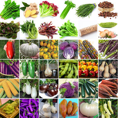 Lot Heirloom Vegetable Garden Seeds Non GMO/Hybrid Organic Survival Plant bank