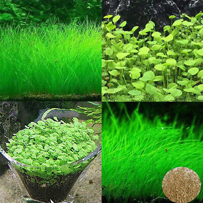 5 Bags Aquarium Green Plants Seeds Live Water Grass Fish Tank DIY Supply Decor