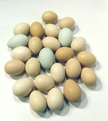 2 Dozen 24 HOLLOW CHICKEN EGGS blown out ONE HOLE Brown Tan Greenish White color