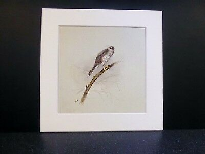 """BEAUTIFUL MOUNTED 8x8"""" SQUARE BIRD PRINT BY GEORGE LODGE SPARROWHAWK"""