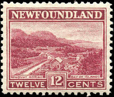 Mint Canada Newfoundland 1923-1924 12c Scott #141 Stamp Never Hinged
