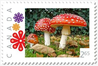 MUSHROOMS = FLY AGARIC = 2.65 rate = Picture Postage MNH Canada 2019 [p19-05s01]