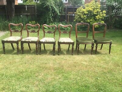 Set Of 6 William IV Balloon Back Solid Mahogany Dining Chairs