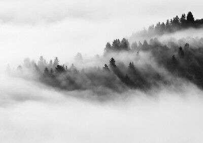 A4  Awesome Foggy Forest Poster Print Size A4 Misty Nature Poster Gift #14165