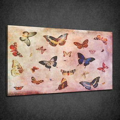 Vintage Butterflies Collection Beautiful Box Canvas Print Wall Art Picture