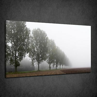 Beautiful Row Of Trees In The Morning Fog Box Canvas Print Wall Art Picture