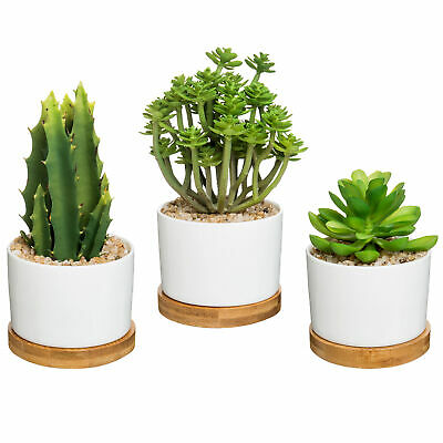 Artificial Succulent Potted Plants in Round White Ceramic Pot with Bamboo Saucer